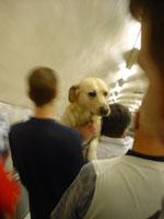 cute doggy on tube escalator